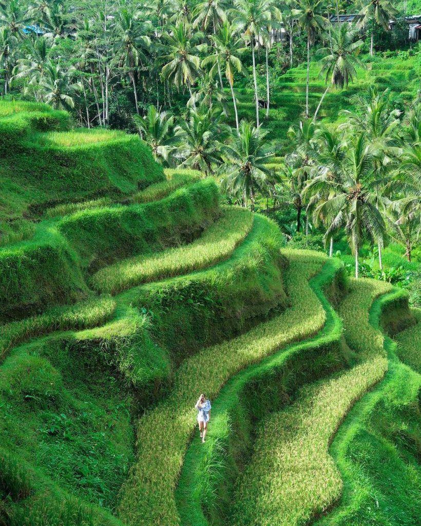 Tegallalang+Rice+Terrace+-+Ubud,+Bali+-+Elise+Darma